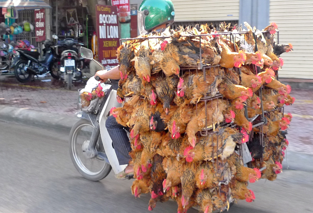 Hanoi Chickencycle