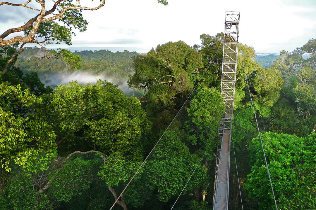 Rainforest canopy walk, Brunei. Photo by Patrick Smith.